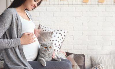 pelihara kucing saat hamil